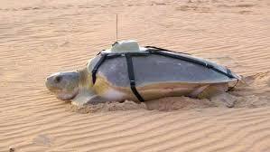 Tracking Sea Turtles